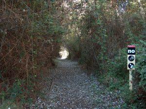 La alta maleza del Bosque Galería crea pasadizos, en los que los que los caminos quedan cubiertos de maleza.
